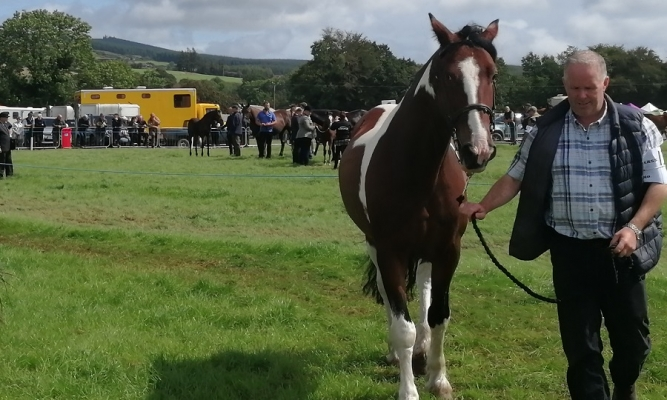 Man and horse at the Cappamore Show 2019